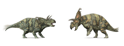Dinosaur Albertaceratops. Albertaceratops was a genus of centrosaurine horned dinosaur from the middle Campanian-age Upper Cretaceous Oldman Formation of Alberta Royalty Free Stock Photo