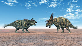 Dinosaur Albertaceratops Royalty Free Stock Photo