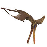 Dinosaur Anhanguera Pterosaur. 3D rendering with clipping path and shadow over white royalty free illustration