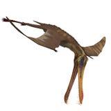Dinosaur Anhanguera Pterosaur royalty free illustration