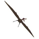 Dinosaur Anhanguera Pterosaur Stock Photos