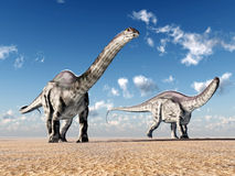Dinosaur Apatosaurus Stock Images