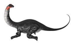 Dinosaur Apatosaurus Royalty Free Stock Images