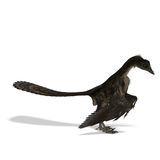 Dinosaur Archaeopteryx. 3D rendering with clipping path and shadow over white stock illustration