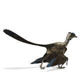 Dinosaur Archaeopteryx. 3D rendering with clipping path and shadow over white Stock Photography