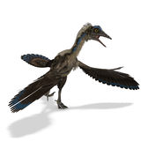 Dinosaur Archaeopteryx. 3D rendering with clipping path and shadow over white Royalty Free Stock Photography