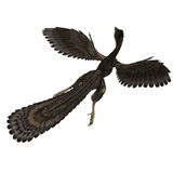 Dinosaur Archaeopteryx. 3D rendering with clipping path and shadow over white royalty free illustration