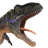 Dinosaur Aucasaurus. With clipping path over white Stock Photos