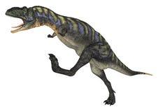 Dinosaur Aucasaurus Stock Images