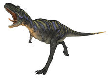 Dinosaur Aucasaurus Royalty Free Stock Photography