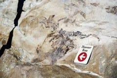 Dinosaur Bone Stock Photos