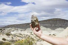 Dinosaur bone fragment, La Leona Petrified Forest, Argentina Royalty Free Stock Images