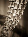 Dinosaur bones - Liopleurodon Stock Image