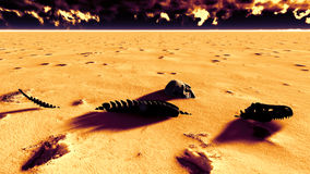 Dinosaur bones lying on desert Stock Photography