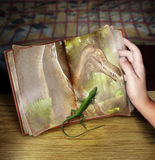 Dinosaur book. A small lizard crawls onto the page of a picture in a book of an extinct large dinosaur. Concept for evolution royalty free stock photography