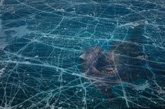 Dinosaur brakujący pierwszy trymestr pod lodem Fotografia Stock