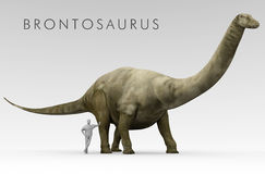 Dinosaur Brontosaurus And Human Size Comparison. An illustration of the dinosaur Brontosaurus excelsus (formerly known as Apatosaurus excelsus) depicted Stock Photography