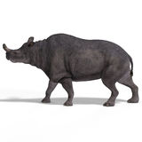 Dinosaur Brontotherium. With Clipping Path over white Stock Images
