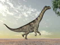 Dinosaur Camarasaurus Stock Photography