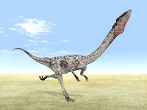 Dinosaur Coelophysis Royalty Free Stock Photos