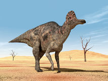 Dinosaur Corythosaurus Stock Photos
