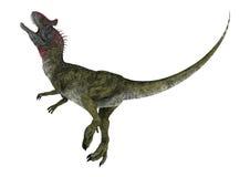 Dinosaur Cryolophosaurus Royalty Free Stock Photos
