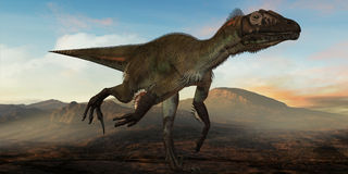 Dinosaur d'Utahraptor ostrommayorum-3D Photographie stock libre de droits