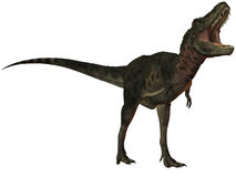 Dinosaur de Tarbosaurus Bataar-3D Image stock