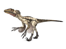 Dinosaur Deinonychus Stock Photo