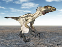 Dinosaur Deinonychus Stock Photos