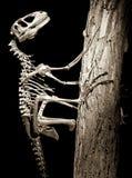 Dinosaur - Deinonychus Stock Image