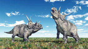 Dinosaur Diabloceratops Royalty Free Stock Images