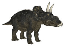 Dinosaur Diceratops Stock Images