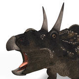 Dinosaur Diceratops Royalty Free Stock Photo
