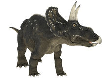 Dinosaur Diceratops Royalty Free Stock Photos