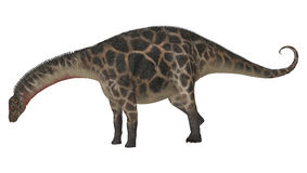 Dinosaur Dicraeosaurus Image stock