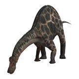 Dinosaur Dicraeosaurus Stock Image