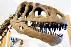 Dinosaur. Dinosaur belong to the diapsid reptile group. Stock Photos