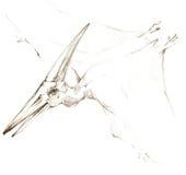 dinosaur dinosaurieteckningsblyertspennan skissar Arkivfoto