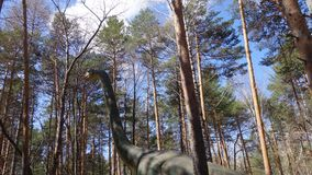 The dinosaur Diplodocus in the woods. Dinosaur Diplodocus among the trees Royalty Free Stock Image