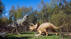 Dinosaur duel. A fight in the prehistoric forest, big plastic replica models. Tyrannosaurus rex versus Triceratops. Predator attacking mother with young cub Stock Photo