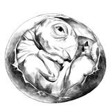 Dinosaur egg hatched sketch vector graphics. Dinosaur egg hatched rolled into a ball newborn sketch vector graphics black and white drawing Stock Image