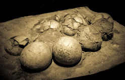 Dinosaur eggs in the nest Royalty Free Stock Images