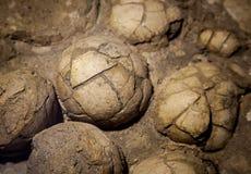 Dinosaur eggs in the nest Stock Photos