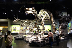 dinosaur exhibition hall Stock Images