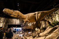 Dinosaur Exhibits at Royal Tyrrell Museum in Drumheller, Canada. Visitors flock to the popular T-Rex exhibits at the entrance of the Royal Tyrrell Museum in Stock Image