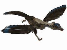 dinosaur för archaeopteryx 3d Fotografering för Bildbyråer