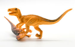 Dinosaur fight sceneon white background. Dinosaur fight scene on white background closeup Stock Images