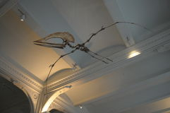 Dinosaur in Flight. Dinosaurs abound this one from above on the forth floor of the American Museum of Natural History in New York City stock images