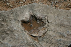Dinosaur footprint. Presumably fake dinosaur footprint in colorado Stock Photography